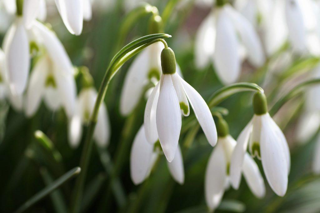 Tuintaken februari - Tuinkalender