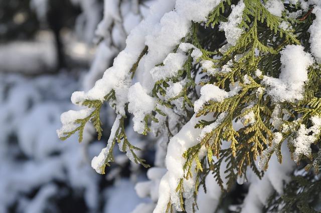 Wintergroen, winterbloeiend, of winterhard? - Tuintips voor de kleine tuin